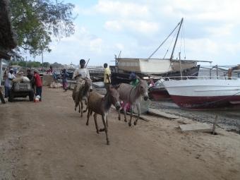 Lamu 5wp